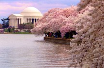 DC in Bloom, early morning